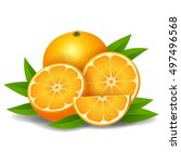 fresh ripe oranges with leaves | Shutterstock . vector #497496568