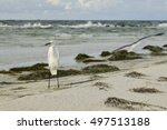 Snowy Egret Standing On The...