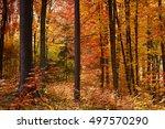 autumn forest | Shutterstock . vector #497570290