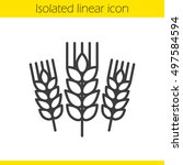 wheat ears linear icon. barley... | Shutterstock .eps vector #497584594
