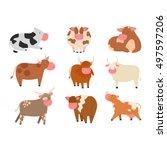 milk cow bull with calf bull... | Shutterstock .eps vector #497597206
