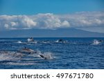 A Big Pod Of Striped Dolphins ...