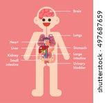 anatomy character of human... | Shutterstock .eps vector #497687659
