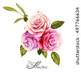bouquet of roses. hand drawn.... | Shutterstock .eps vector #497766634