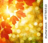 autumn leaves on a blurred... | Shutterstock . vector #497785510