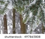Small photo of Abies concolor, commonly known as the white fir[4] or Colorado white-fir. Covered with freshly fallen snow.