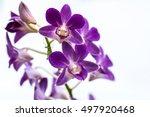 Orchids Orchids Purple  Orchid...