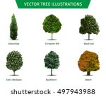 different tree sorts with names.... | Shutterstock .eps vector #497943988