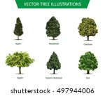 different tree sorts with names.... | Shutterstock .eps vector #497944006
