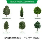 different tree sorts with names.... | Shutterstock .eps vector #497944033