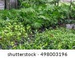 garden trees and plants... | Shutterstock . vector #498003196