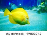 Underwater Image Of Reef And...