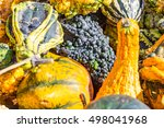 A Dark Purple Colored Gourd...