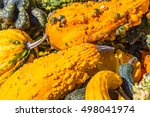 Multiple Autumn Gourds With...