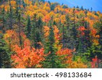 fall foliage in white mountain... | Shutterstock . vector #498133684