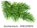 green fluffy pine branch.... | Shutterstock .eps vector #498139894