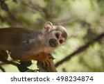 little monkey in safari | Shutterstock . vector #498234874