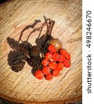 Small photo of Dried red autumn rowan and alder cone on wooden stump in garden on sunny day