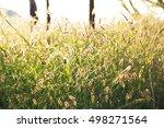 meadows   spring   fresh  | Shutterstock . vector #498271564