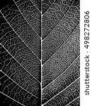 black white closeup leaf... | Shutterstock .eps vector #498272806
