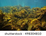 Large Fronds Of Brown Stalked...