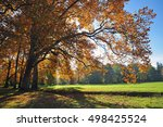 autumn big tree nature  fall... | Shutterstock . vector #498425524