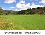 paddy fields in kodagu  coorg ... | Shutterstock . vector #498538900
