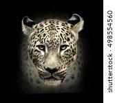 leopard head on black... | Shutterstock . vector #498554560
