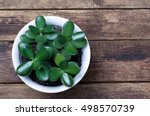 potted plant standing on a... | Shutterstock . vector #498570739