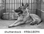 pet dogs in the compartment ... | Shutterstock . vector #498618094