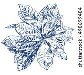 exotic flowers set. botanical... | Shutterstock .eps vector #498699484