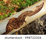 split drainage pipe caused by... | Shutterstock . vector #498722326