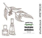 hand drawn eucalyptus leaves... | Shutterstock . vector #498738130