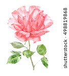 pink rose for your design.... | Shutterstock . vector #498819868