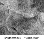 Gray Mink Fur Texture Closeup
