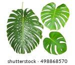 Monstera Jungle Rain Forest Bi...