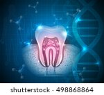 healthy tooth with roots... | Shutterstock .eps vector #498868864