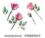 roses and leaves  watercolor | Shutterstock . vector #498889819