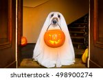 dog sit as a ghost for... | Shutterstock . vector #498900274