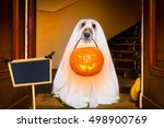 dog sit as a ghost for... | Shutterstock . vector #498900769