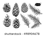 pine cone and fir tree set.... | Shutterstock .eps vector #498904678