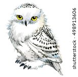 Stock photo snowy owl illustration watercolor 498913606