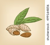 almonds with kernels and leaves.... | Shutterstock .eps vector #499164856