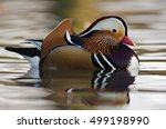 Mandarin Duck  Aix Galericulat...