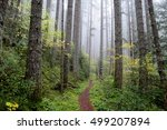 pacific northwest forest trail | Shutterstock . vector #499207894