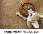 a corgi dog besides a bowl of... | Shutterstock . vector #499221169