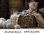 Stock photo group of small striped kittens in an old basket with balls of yarn 499242394