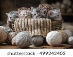 Stock photo group of small striped kittens in an old basket with balls of yarn 499242403