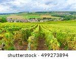 champagne vineyards at sunset ...   Shutterstock . vector #499273894
