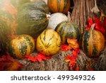 Ripe Pumpkins Vegetables Garde...